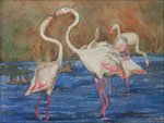 flamands roses delorme